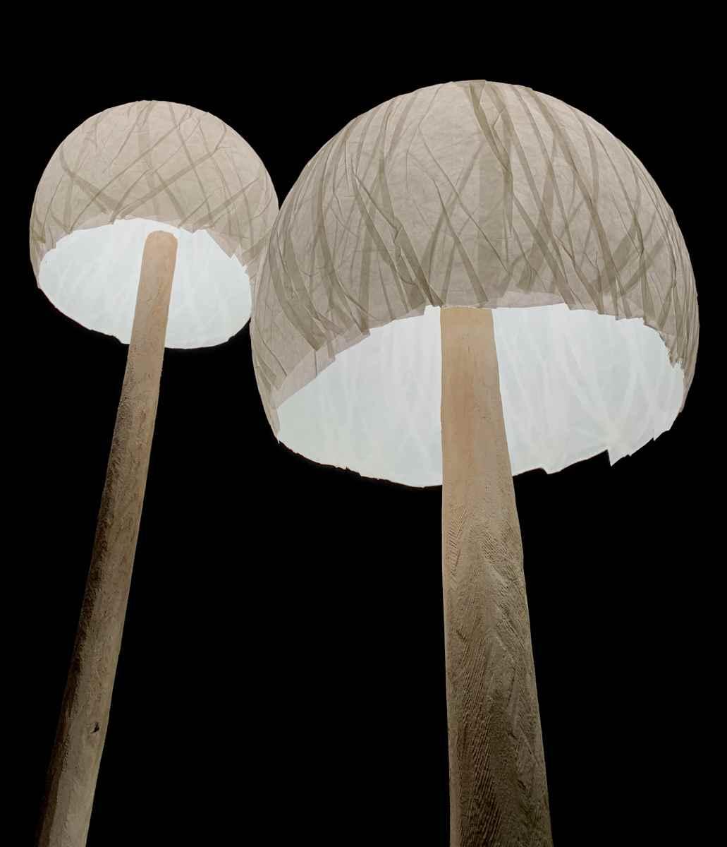 Faltenstruktur der Leucht-Pilze